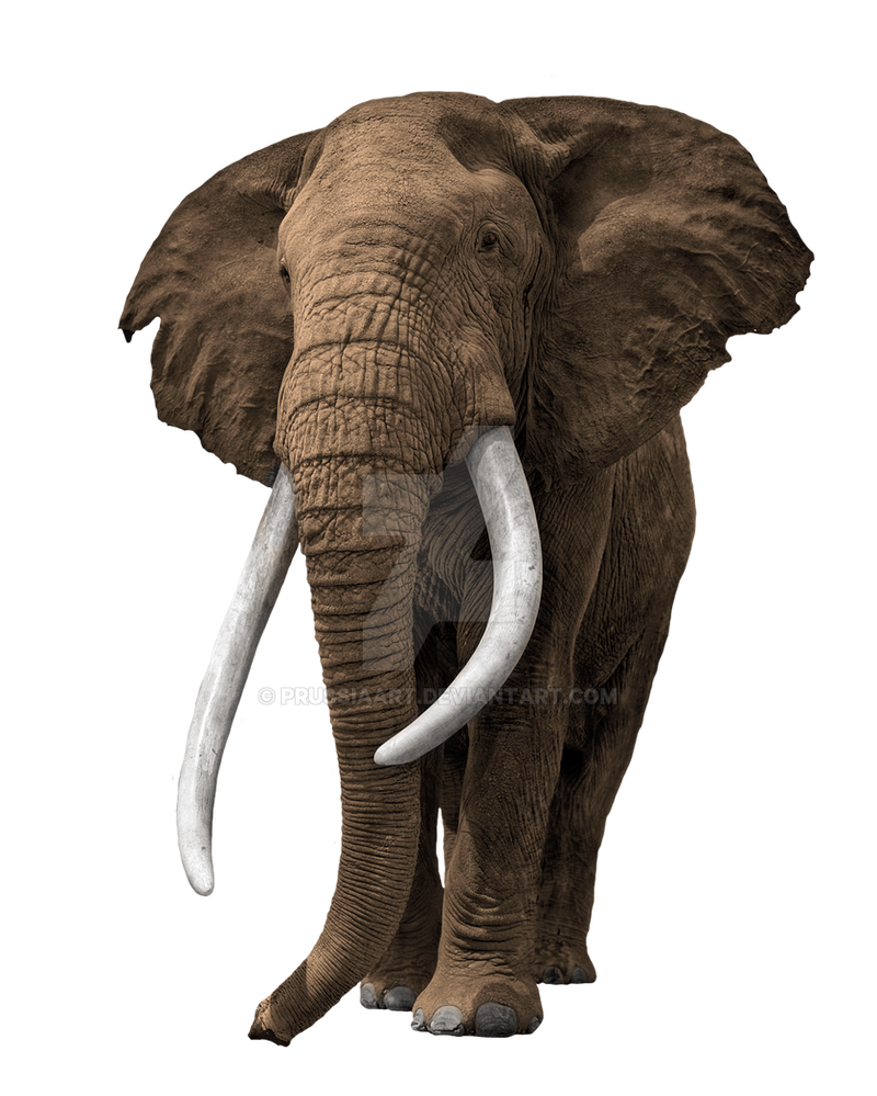 elephant on a transparent background by prussiaart on