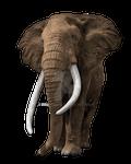 Elephant on a transparent background.