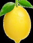 Lemon on a transparent background.