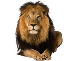 Predator lion on a transparent background. by PRUSSIAART