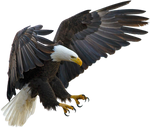 American eagle on a transparent background.
