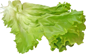 Salad leaf on a transparent background. by PRUSSIAART