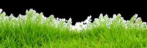 Grass on a transparent background.