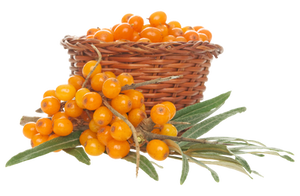 Sea-buckthorn on a transparent background. by PRUSSIAART