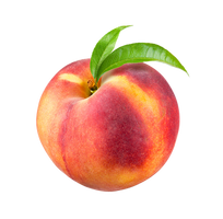 Ripe peach on a transparent background. by PRUSSIAART