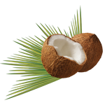 Coconuts on a transparent background