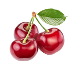 Cherry berries on a transparent background by PRUSSIAART
