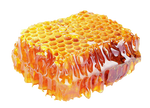 Honey comb on a transparent background.