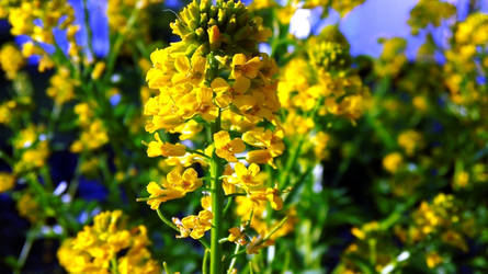 Widget Photo by Bnuldun