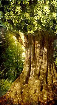 Nature sidebar