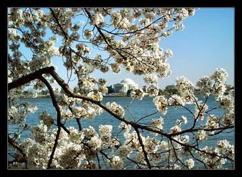 Framing Jefferson Memorial by BrainWalker