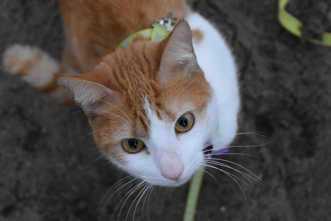 Park Cat by Rikkanna