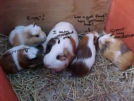 Guinea-pigs RULE by BloodDragon