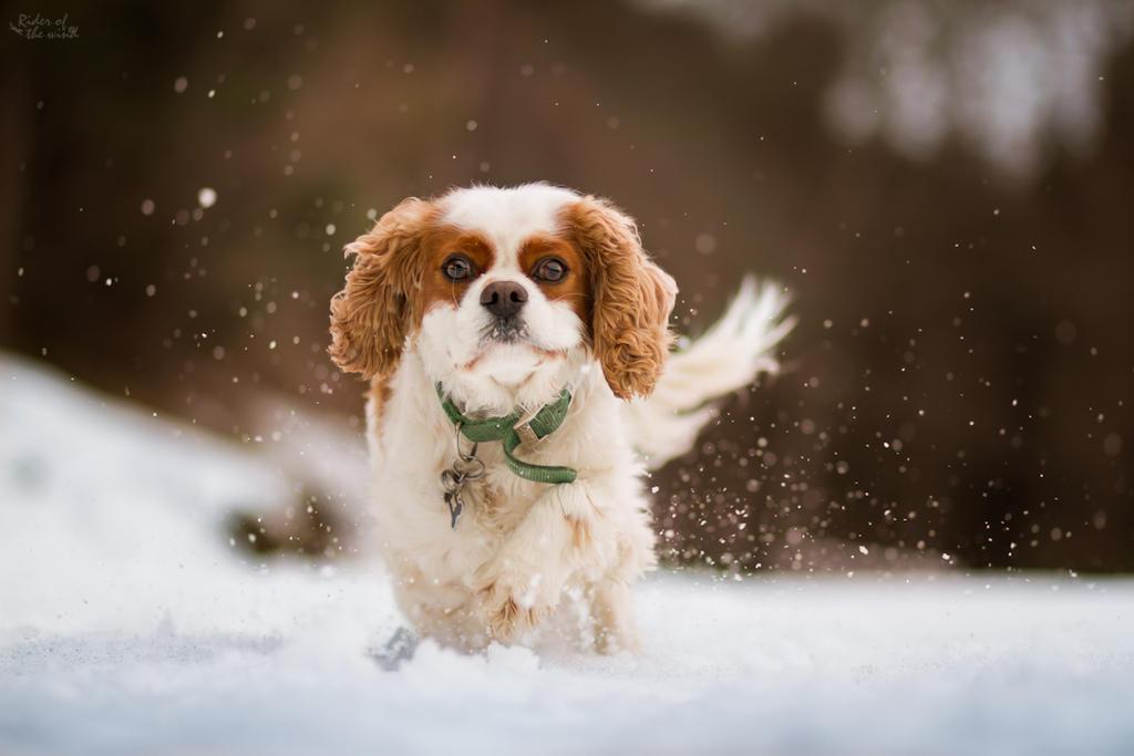 Snow craziness by Riderofthewind95