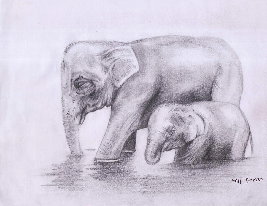 Mother elephent by mhimranhossain