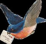 Big Blue Bird mail (stock)