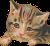 Loveable Kitten (transparent) Icon