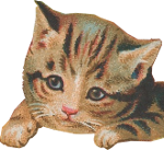 Loveable Kitten (transparent) Icon ultrabig by linux-rules