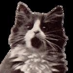 Rogue Cat One (stock, cut)