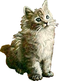 Cute Kitty (stock)
