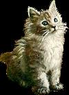 Cute Kitty Icon big (100x137)