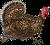 Too Fast Too Turkey (rev) Icon