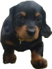Cute Puppy Icon big by linux-rules