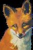 Fox Icon big