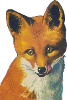 Fox Icon big by linux-rules