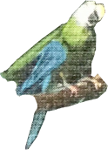 Parrot (4) Icon ultrabig by linux-rules