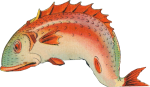 A Fish tale Icon ultrabig by linux-rules
