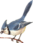 Blue Jay Icon ultrabig by linux-rules