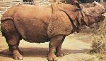 Rhinoceros unicornis (Indian Rhino) Icon ultrabig