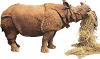 Rhinoceros unicornis (straw) Icon big