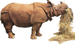 Rhinoceros unicornis (straw) Icon ultrabig