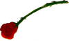 Tears and bouquets (rose) Icon big