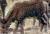 Winter hind Icon