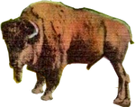 Buffalo North Dakota (2) (stock)