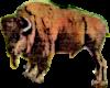 Buffalo North Dakota (2) Icon big