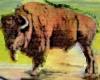 Buffalo North Dakota (1) Icon big