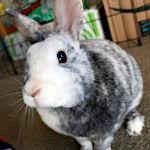 Butters Cute Rabbit Icon ultrabig