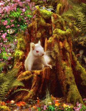 small resident of a large forest by Irina-Ponochevnaya