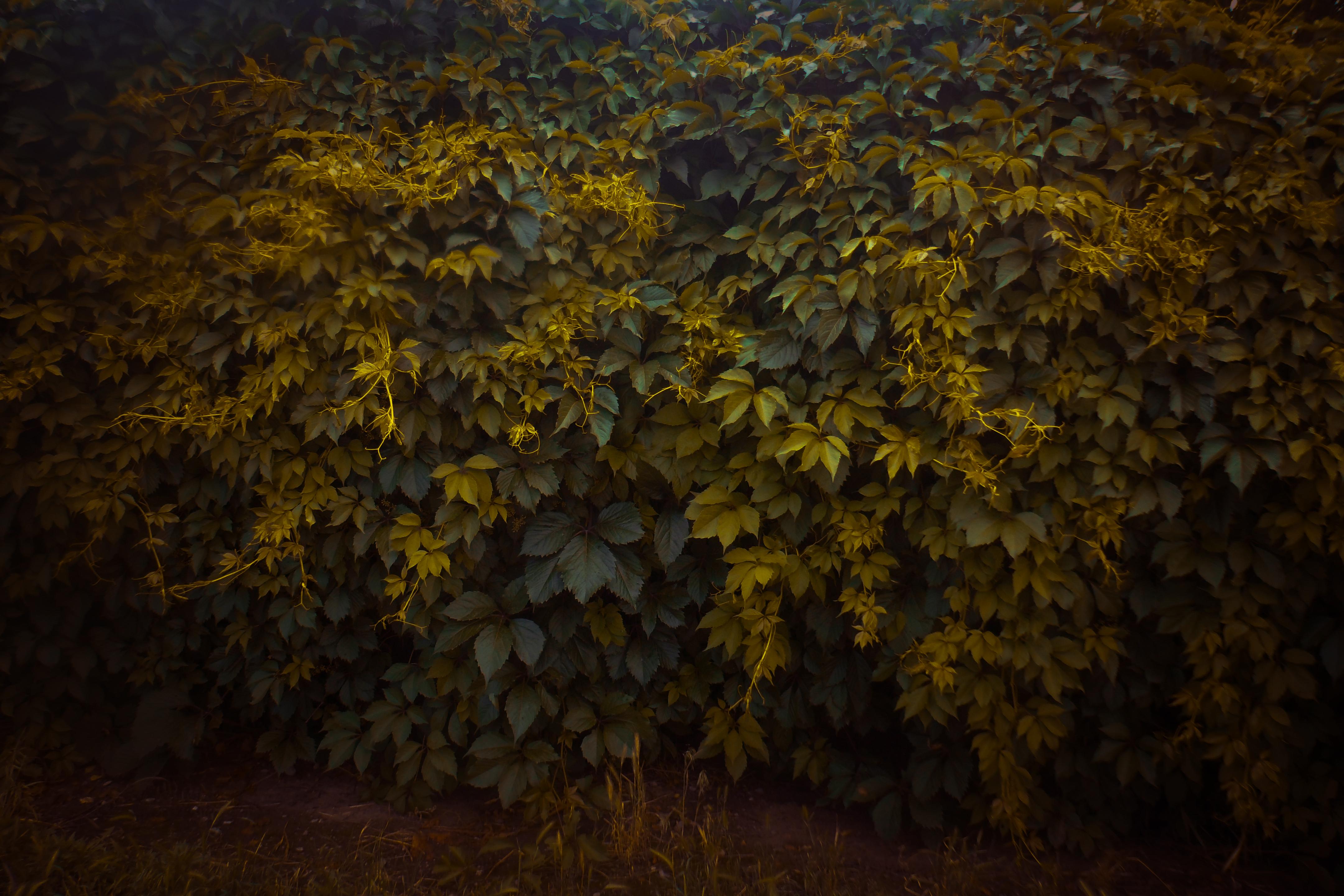 foliage by Irina-Ponochevnaya