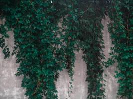 foliage1 by Irina-Ponochevnaya