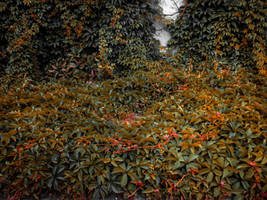 ivy bed by Irina-Ponochevnaya