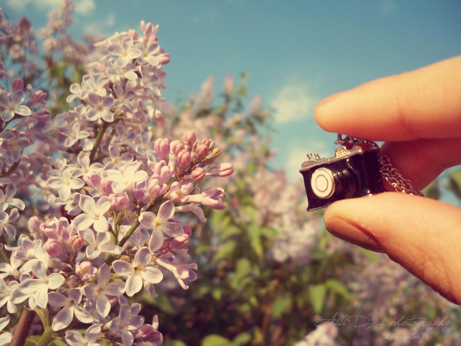Catch the beauty by AlliDzi