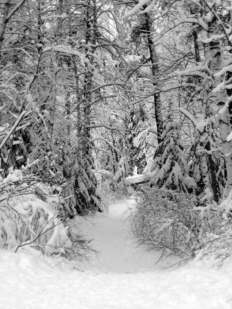 snowy trail Gallery