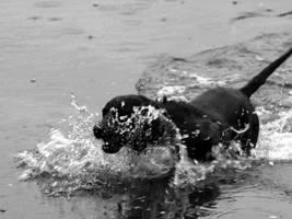 Splashing Dog by dseomn