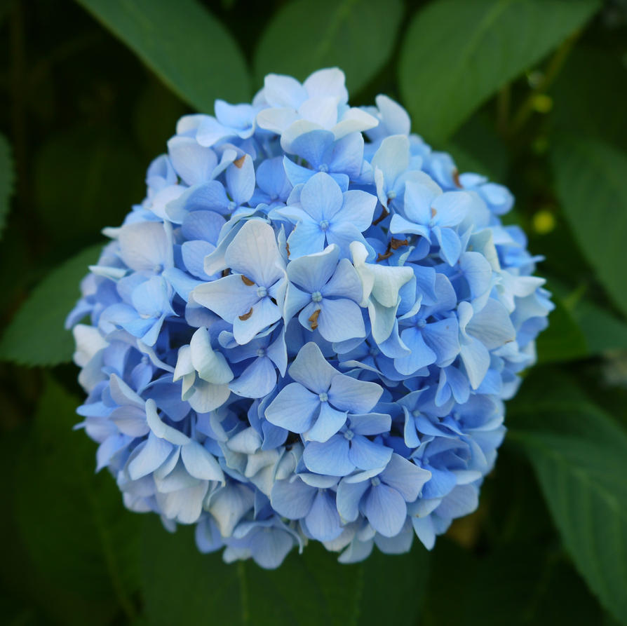 Pictures of blue flowers and their names fileblue and yellow light blue flowers by dseomn izmirmasajfo