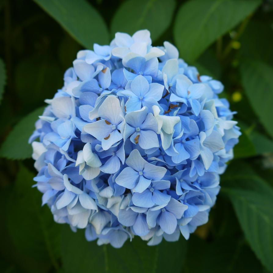 Light blue flowers by dseomn on deviantart light blue flowers by dseomn izmirmasajfo